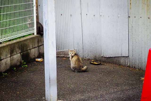 Today's Cat@2015-03-09