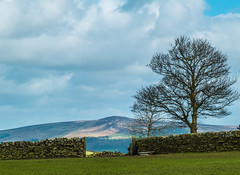 Beamsley Beacon (tubblesnap) Tags: wool spring scenery fuji sheep yorkshire hill lamb lambs beacon dales ewe silsden beamsley xs1