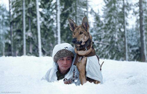 A Finnish soldier practices maneuvers in the winter snow at a military dog training school during the Finnish-Soviet Continuation War. Hämeenlinna, Finland. February 1941.