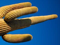 Green Giant (Joe Y Jiang) Tags: trip family friends arizona cactus landscape lumix nationalpark lasvegas grandcanyon sedona panasonic saguaro petrifiedforest 2014 2015 gx7 danniao