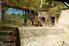 Zoo Bratislava 18.04.2015 17 (Fruehlingsstern) Tags: zoo zebra giraffe bratislava br gibbon dinosaurier katta schimpanse nashorn dinosaurierpark roterpanda zoobratislava weisetiger weiselwen panasonicfz200