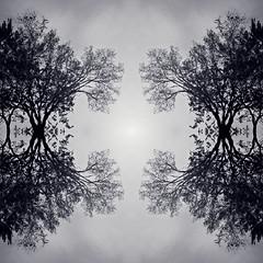 Treeflections 3
