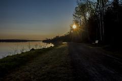 11 May 2016 (runningman1958) Tags: morning sun nature river nikon earlymorning 365 ottawariver morningsun 365dayproject d7200 nikond7200