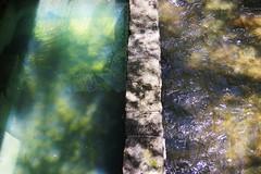 plunge pool (Summ....) Tags: franklloydwright fallingwater natureconservancy plungepool bearrun img2273