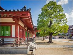 Shitenn-ji (David Panevin) Tags: street tree japan temple shrine path olympus  osaka kansai omd em1 urbanfragments shitennji davidpanevin lumixgvario714mmf40asph