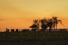 Por do Sol na Fazenda (pmenge) Tags: contraluz sp animais pds curral 100400 7dii