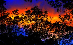 Colors of Nature (Larger Version) (Josh Rokman) Tags: nature trees color colorful forest sunset forestsunset nikond7000 rainbow orange blue orangesky bluesky