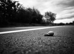 Finish line (thomas.madhavan) Tags: road urban lines crossing slow cardiff snail cardiffbay barrage