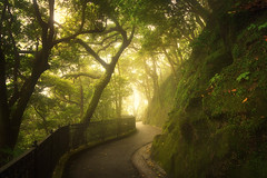 The Green Walk (albert dros) Tags: road travel trees plants mist green tourism fog hongkong atmosphere vegetation greenery thepeak victoriapeak albertdros
