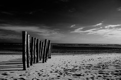 17/52 Shore artefacts [explored] (eric_marchand_35) Tags: ocean sea france beach atlantic shore plage ileder rivage atlantique charentemaritime risland 52in2016challenge