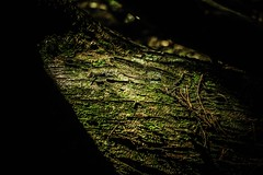 #251 of 365 days - I love moss <3 (Ruadh Sionnach) Tags: wood wild tree musgo green nature forest moss woods witch natureza bosque celtic druid witches wilderness viking celt floresta rvore witchcraft paganism mata mystic pagan druidism wildness bruxaria paganismo