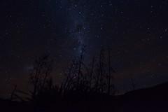 Milky way silhouette (colinhansen1967) Tags: milkyway sky stars flax silhouette airglow gravitywaves newzealand canterbury mounthuttretreat nikon d3200 tokina tokina1116mm longexposure darkness