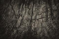 Wood texture (PaulHoo) Tags: wood blackandwhite bw holland detail macro texture netherlands monochrome closeup forest nikon pattern s nik vignette lightroom 2016 gravenland d700