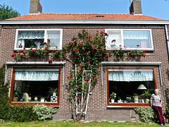 Rozenkruis  ( met moeders erbij :-)  ) (Omroep Zeeland) Tags: ros schouwenduiveland padmos