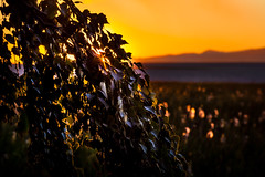 sunset time in summer (michaelinvan) Tags: light summer sun mountain tree water nova leaves river richmond again f2 backlit dyke terra setting 135mm westtrail canon5d2