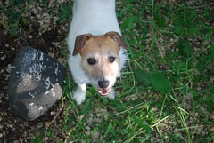 Didi (3) (Danielle Carrier) Tags: dog pet pets dogs didi