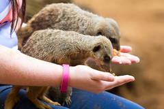 Meerkat (mattbeee) Tags: mammal meerkat meercat simples carinsurance keeperfortheday