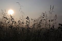 the day begins (Xtraphoto) Tags: morning light sun grass start sunrise licht day tag gras sonne sonnenaufgang morgen begins beginn