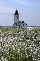 Phare de l'le aux Moutons (Laura Carrier) Tags: france photo nikon photographie bretagne paysage aux phare moutons finistre le paysagre d7000