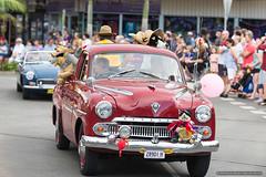 Old Vauxhall ute - Jacaranda Parade 2015 (sbyrnedotcom) Tags: 2015 people events grafton jacaranda parade rural town red vauxhall utility vintage 2door nsw australia