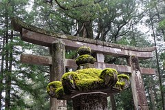 Nikko Toshogu VI (Douguerreotype) Tags: shrine nikko rain buddhist temple japan torii tree moss green gate lantern