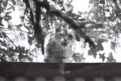 Ethereal Visitor (m_travels) Tags: bw doubleexposure filmswap filmphotography kodaktrix400 blackandwhite analog argentique analogue 35mm cat kitty caturday
