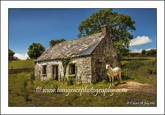 0206  White Horse Inn 7th July 2016 (jonestown_pic /Tom GracePhotography.com) Tags: horses white oldhouses coclare ireland imagesmaynotbeusedordownlaodedwithoutwrittenpermissionfromtomgrace imagecopyrightedtotomgracephotography wwwtomgracephotographycom