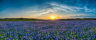 Sunset over Bluebonnets D80-8716.jpg