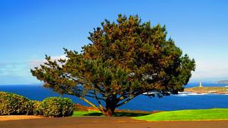 855 - El árbol que no deja ver el bosque