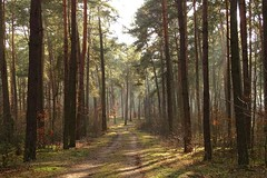 light in the forest (JoannaRB2009) Tags: trees winter light mist nature fog forest landscape woods shadows path poland polska sulejw