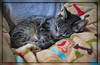 Dream On -- Happy Caturday! (gtncats) Tags: pet cat slumber tabby kitty dreaming cuddly catnapping greatphotographers photographyforrecreation canong16 canonpowershotg16 infinitexposure