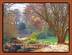 Sei getrost und unverzagt 9/ Be strong and courageous 9 (Martin Volpert) Tags: christ god faith lord bible christianity bibbia herr scripture scriptures biblia gott holyspirit bijbel biebertal glauben christentum bibleverses jesuschristus heiligergeist bibelverskarte mavo43 lovetruth gailscherpark