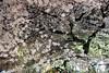 京都の夜桜 (nobuflickr) Tags: japan cherry kyoto 桜 sakura 中京区 takasegawa kiyamachi 高瀬川 京都市 20150403dsc08302