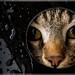 Cat lens