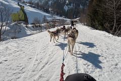 DSC03346_s (AndiP66) Tags: sony dscrx100ii dscrx100m2 rx100ii rx100m2 andreaspeters husky tour hundeschlitten schlittenhunde eskimo dog sled sledge oberwald wallis goms obergoms oberwallis winter schweiz suisse switzerland schnee snow mountains berge alps alpen obergomsvs valais