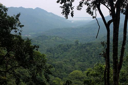 20150224_110500 Pusuk Monkey Forest, Lombok