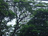 Árvore e a Pomba (1) (jemaambiental) Tags: horse dogs birds fauna hamster cavalos cachorros coelho pássaros tigres macacos picapau ursos suricatas periquitos urubú escorpião faisão poneis chipanzés esqueletodecobra