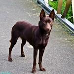 15.Hond - Dog thumbnail