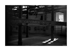 Nikkormat_001 (dcanalogue) Tags: camera rome classic film 35mm vintage lens landscape nikon cityscape h pre format mm filmcamera 135 nikkor 50 rodinal non ai lenses nikkormat f20 ftn adox adonal classicblackwhite silvermax analogicait