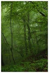 otherworldly (e27182818284) Tags: forest schwbischealb smcpa35105mmf35