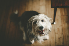 Good Dog | Houston (The Dame of all Trades) Tags: travel dog pets 50mm mutt texas houston wanderlust travelblog petphotography htx dallasphotographer canon6d dallasblogger