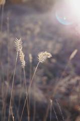 2015-09-29 09.58.53 1 (anastasiya_klenyaeva) Tags: sky nature yellow russia autmn     saratov vsco vscocam vscorussia vscosaratov
