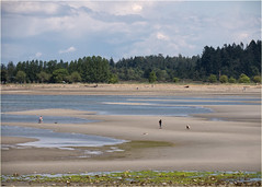 ok, one more (marneejill) Tags: park out community tide going pools tidal parksville
