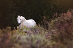 tonyworkshop275b (Muddy Love Photography) Tags: horses horse alt winner wyoming herd