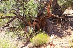 moab-140 (LuceroPhotos) Tags: utah jeeps moab cliffhanger jeeping