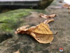 Deadleaves Dead Leaf EyeEm Best Edits EyeEm Best Shots at Lake Circus, Kalabagan, Dhaka (Ashraf  Milon) Tags: deadleaves deadleaf eyeembestedits eyeembestshots