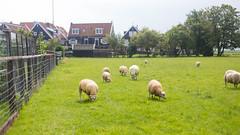 IMG_4410 (Nicola since 1972) Tags: thetrip2015 holland northsea marken noordholland netherlands nl