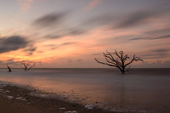 Sunrise at Boneyard Beach, Bottany Bay Plantation, Edisto Beach SC (jackdeblanc) Tags: sunrise southcarolina deadtrees boneyardbeach bottanybayplantation