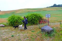 Pearce, River and Austin (Kris_wl) Tags: people outdoors walk dogs dogwalk labs blacklab yellowlab labradorretriever