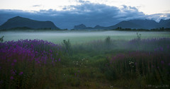 and yet another Northern Midsummernightsdream (lunaryuna) Tags: nightphotography summer mist mountains norway clouds season landscape nocturnal availablelight ngc meadow wildflowers nightsky aftermidnight lofotenislands lightmood lofotenwall lofotenarchipleago northernsummernightssobright